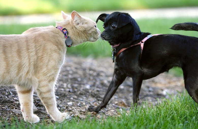 an argument in favor of the debate that dogs are better than cats If you ever want to start a debate amongst a group of animal lovers, throw out the suggestion that cats are better than dogs, then sit back and watch the.