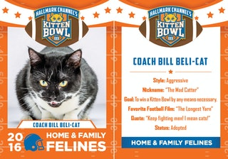 can you adopt the cats from the 39 kitten bowl 39 hallmark channel is hosting a feline extra fur ganza. Black Bedroom Furniture Sets. Home Design Ideas
