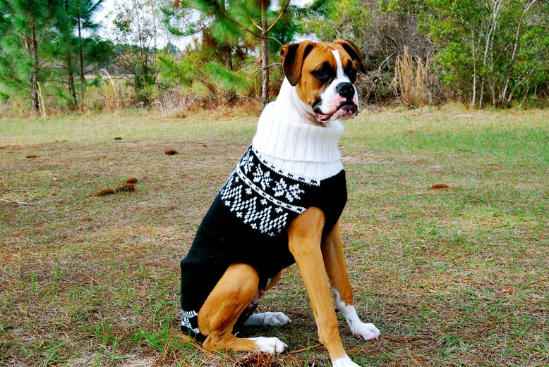 Knitting Patterns For Boxer Dogs : 13 Dog Sweaters To Keep Your Best Friend Warm This Winter Bustle