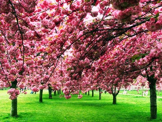 8 Best Places To See Cherry Blossoms This Spring Because