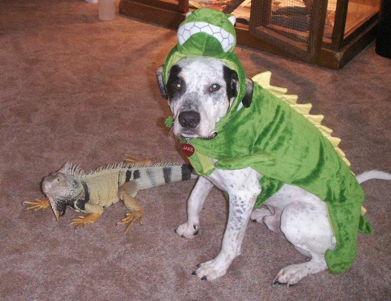 Lizard Costume For Dog Lizard Dog