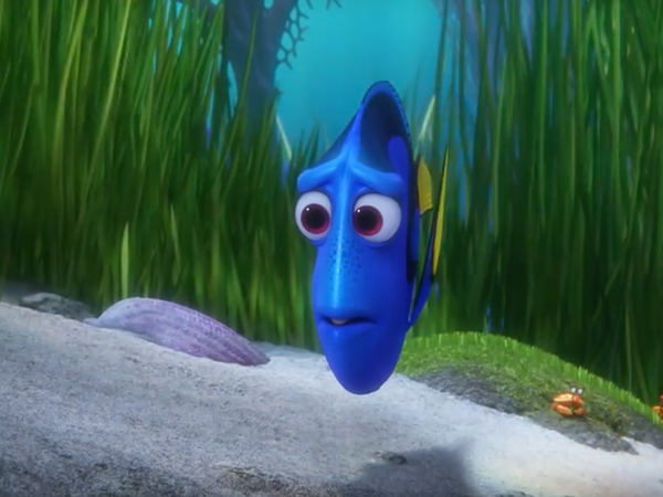 Do royal blue tang fish have memory issues like dory the for Royal blue tang fish