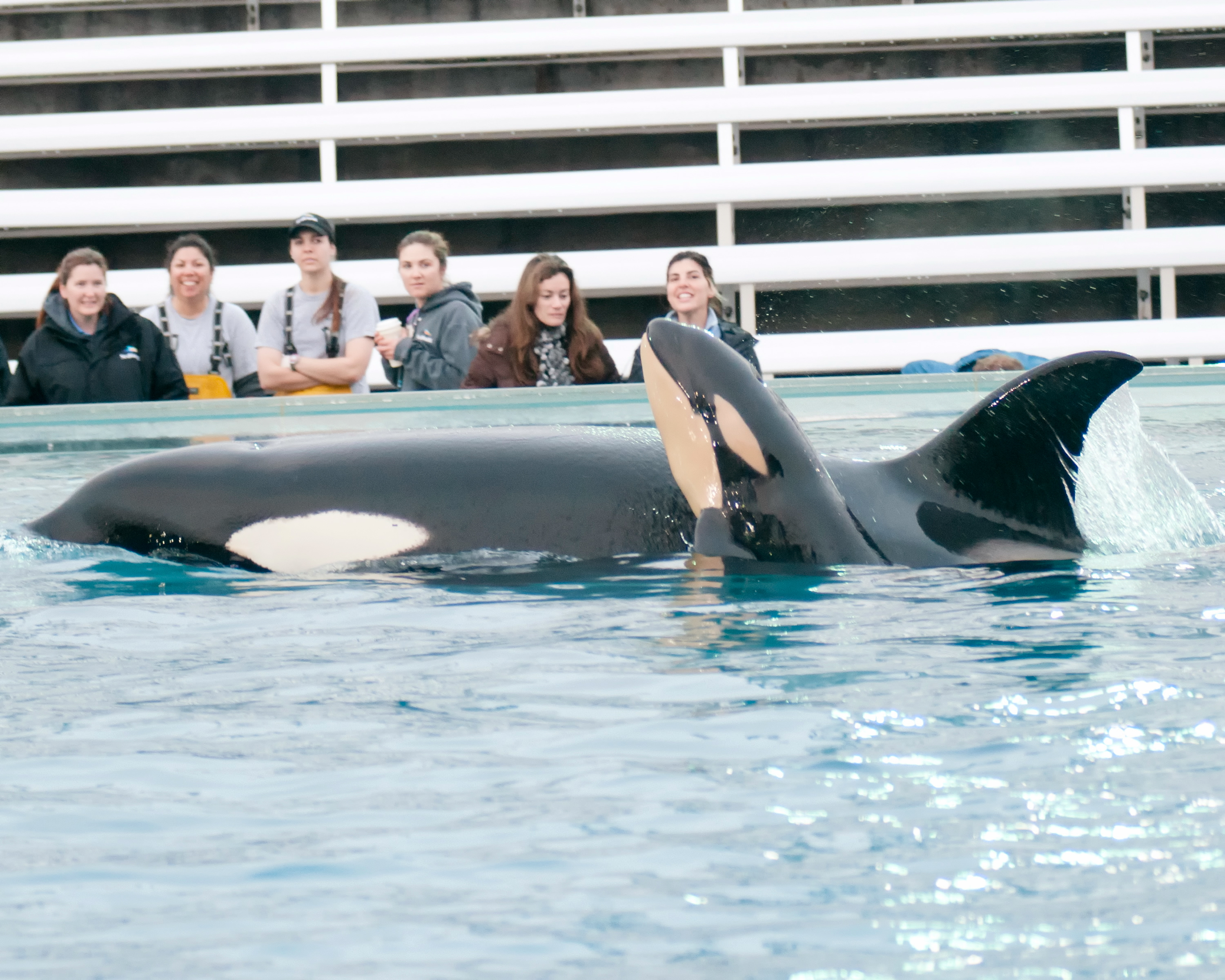 Incidents At Seaworld Parks: SeaWorld Orcas & Trainers Will Stay Separated, And