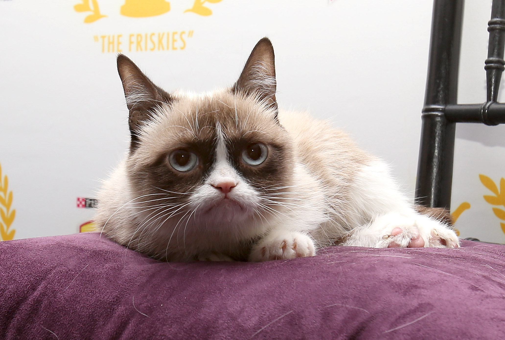 who will voice grumpy cat in her christmas special these 11 people would be perfect - Christmas Names For Cats