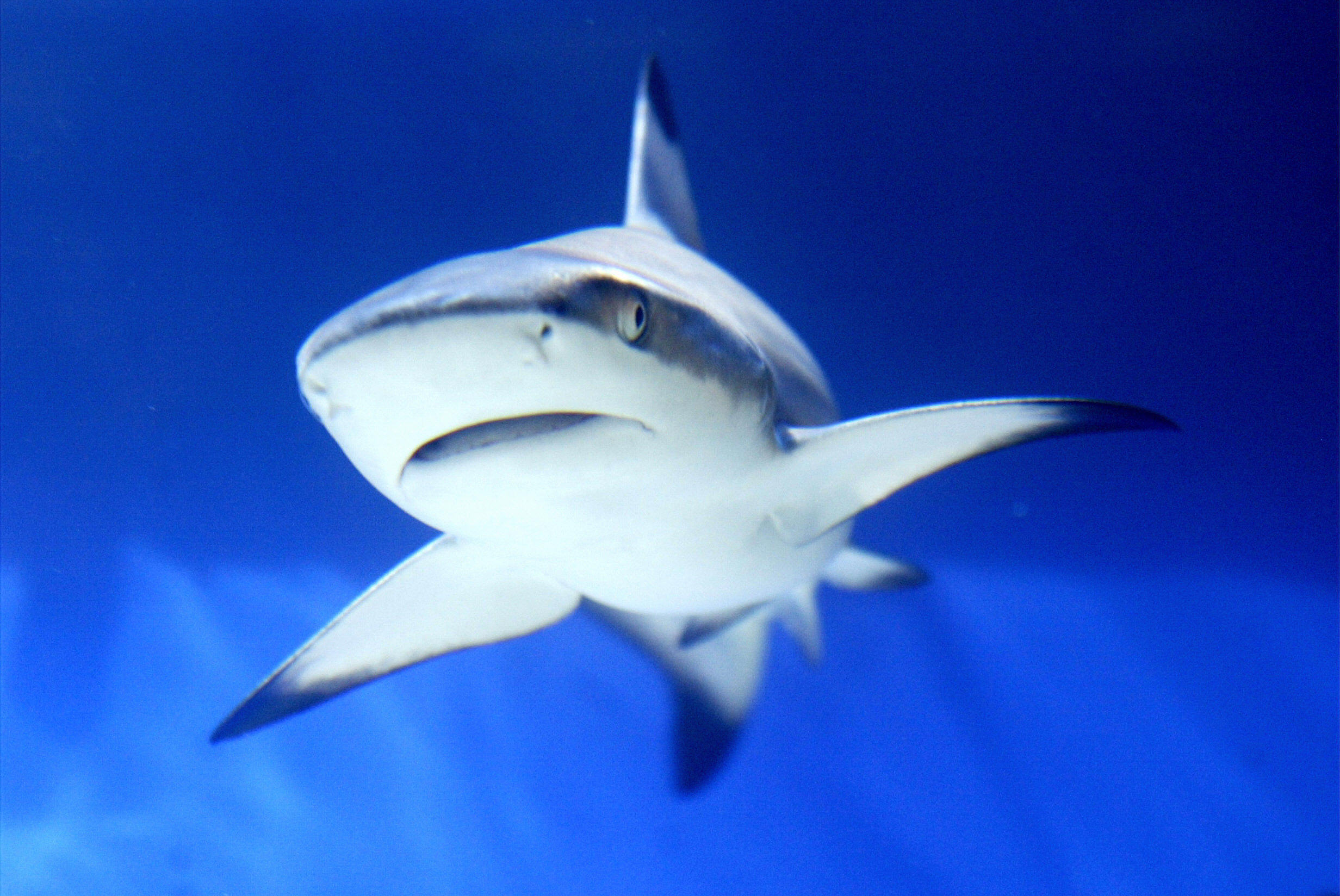 Do Sharks Attack In Shallow Water Or The Deep Sea? The