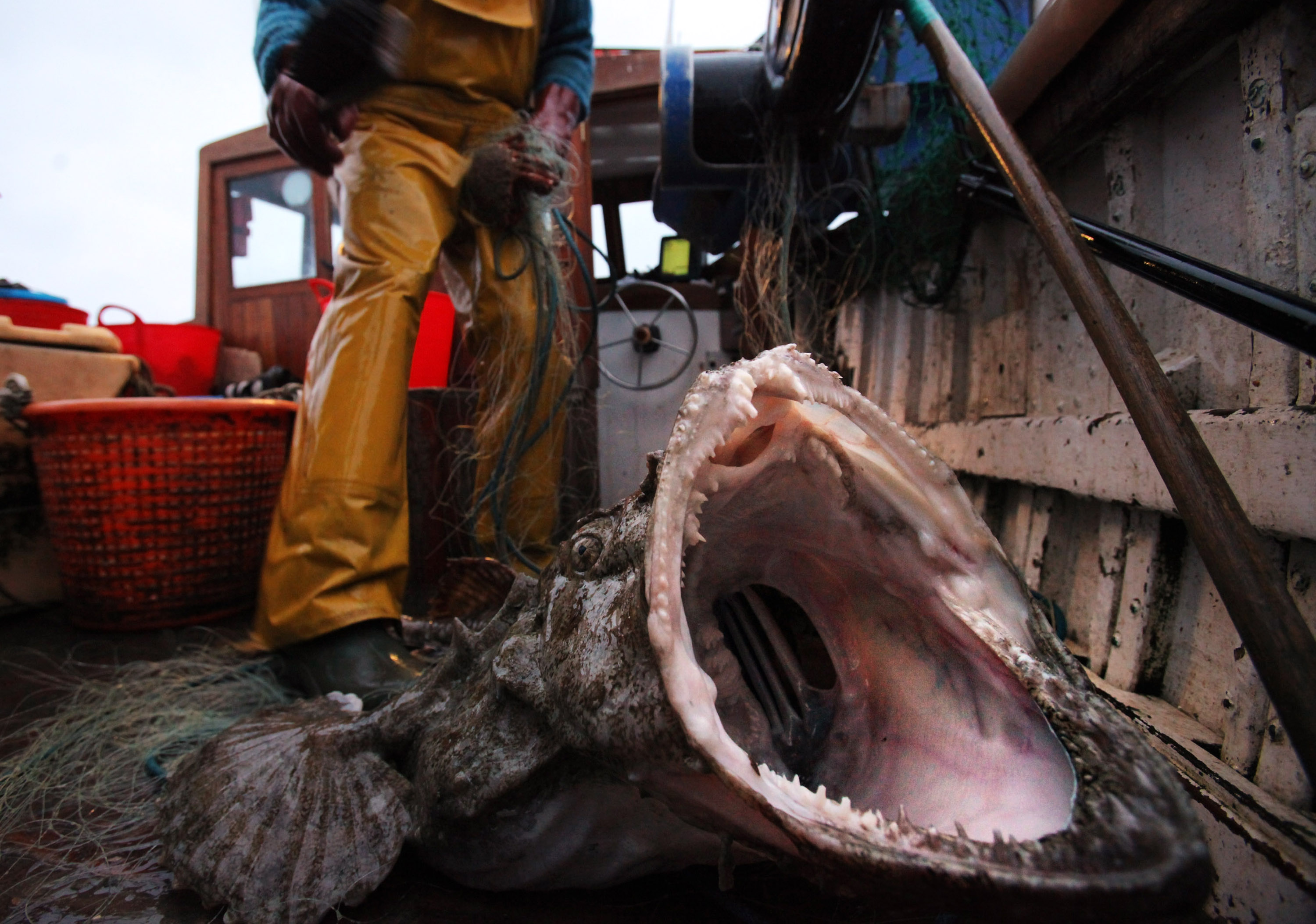 15 Terrifying Things In The Ocean, Because 'Jaws' Has Nothing On These Scary  Sea Creatures
