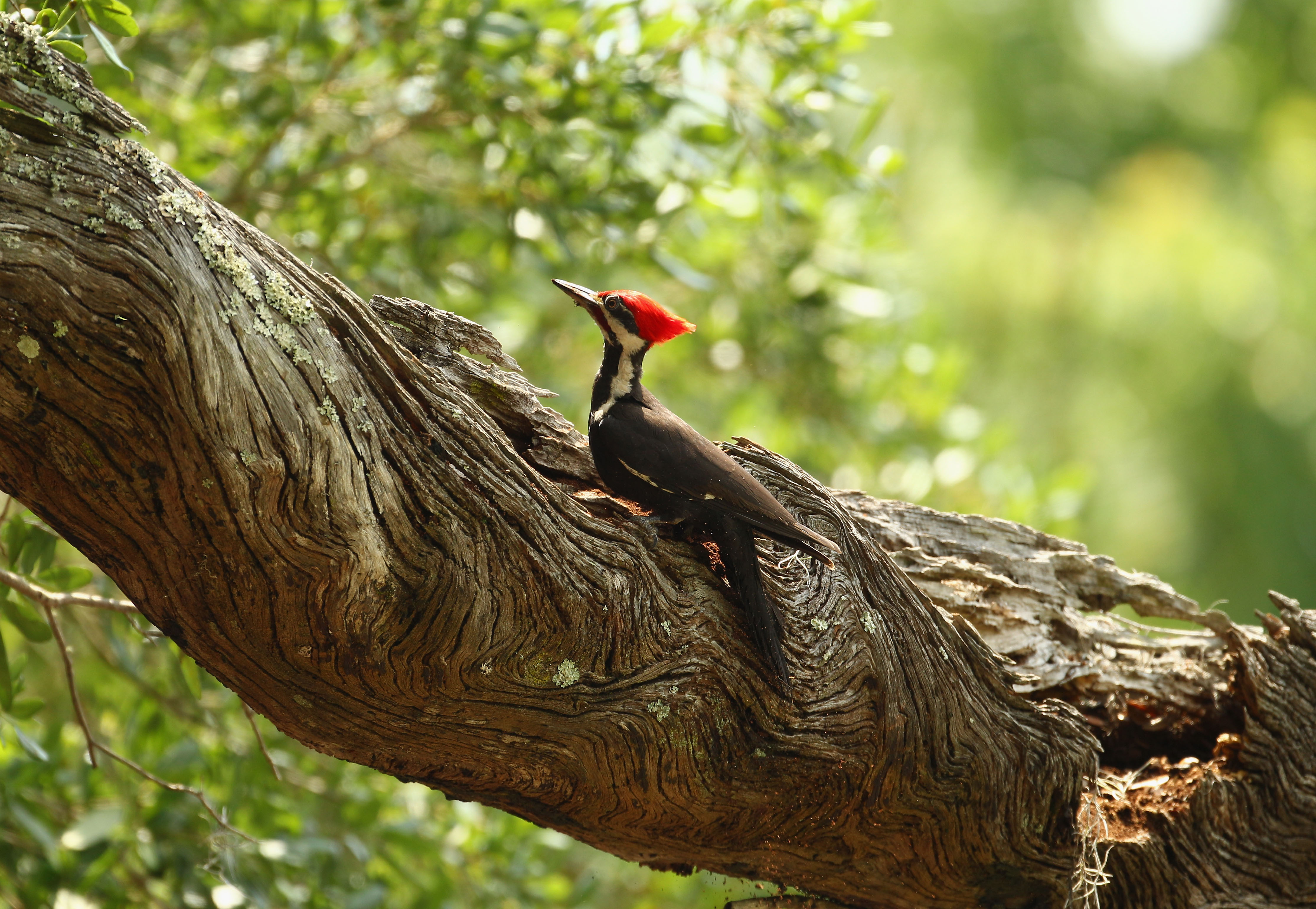 The Weasel Riding A Woodpecker Memes Are Here Because This Is What Internet Was Made For PHOTOS