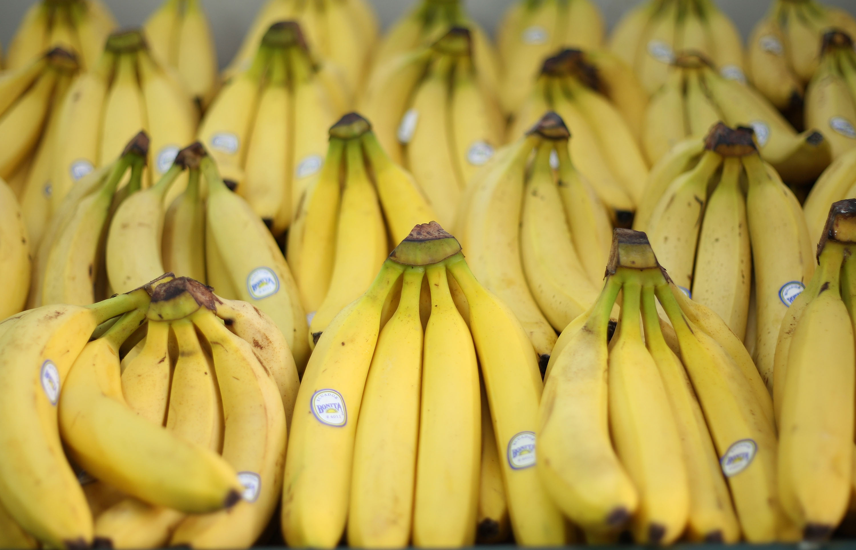 Super deadly spider eggs hide in supermarket bananas and im super deadly spider eggs hide in supermarket bananas and im swearing off fruit buycottarizona Choice Image