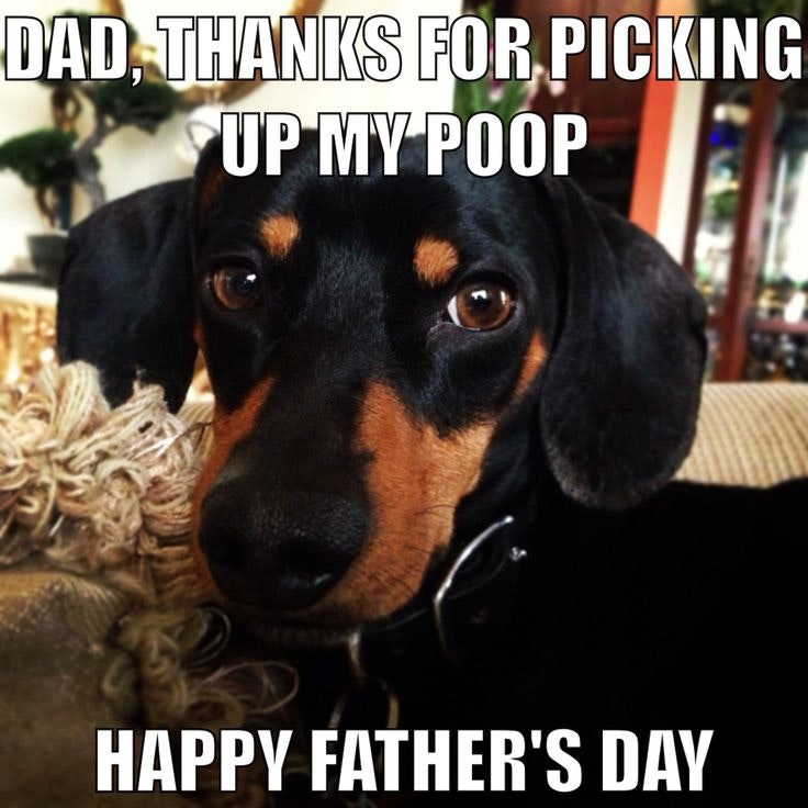 de6bf740 099a 0134 24a4 0e1b1c96d76b?w=740&h=740&fit=crop&crop=faces&auto=format&q=70 13 funny father's day memes that are just too perfect,Dog Dad Meme