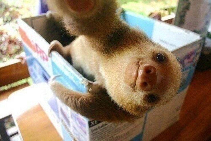 And This Baby Sloth Who Is Just Too Cute I Can't Handle It Guys Oh My God It's a Baby Sloth!
