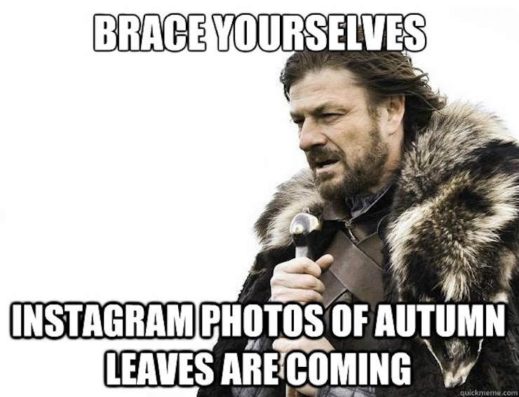 Image result for fall leaves meme