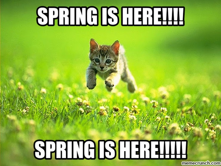 Image result for spring funny