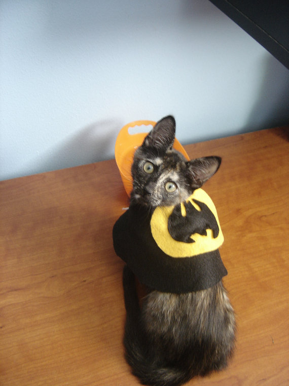 16 Halloween Costumes for Dogs Cats and Other Pets As Nerdy As Their Owners u2013 SLIDESHOW & 16 Halloween Costumes for Dogs Cats and Other Pets As Nerdy As ...