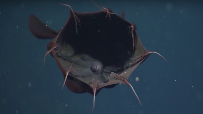 15 Terrifying Things In The Ocean Because Jaws Has
