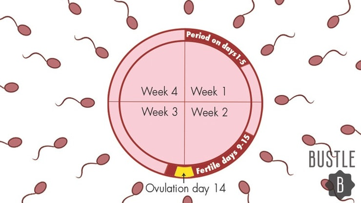 Pregnant Two Days Before Period 27
