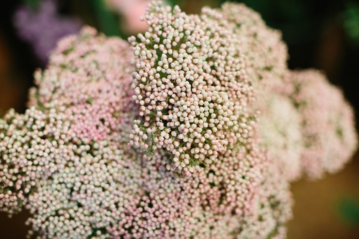 rice flower is the daintiest of the daintiest of budget wedding flowers and it comes in a whole host of colors orange green blue yellow pink red